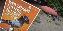 За кормление голубей в Вене - штраф