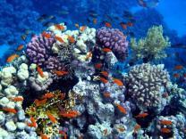 Крупнейший в Дубае коралловый риф открыт для туристов