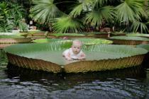 Петербургский ботанический сад модернизируют