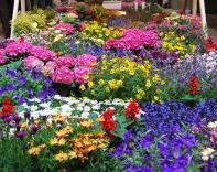 Цветочное шоу пройдет в Израиле