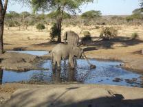"""В Ботсване за слонами можно наблюдать из """"бункера"""""""