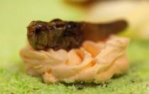 Ресторан, где подают блюда из насекомых, открылся в Варшаве