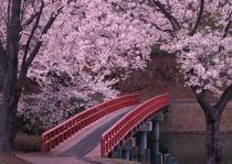 Япония ждет туристов на сезон цветения сакуры