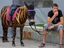 Туристов в Крыму призывают не фотографироваться с животными