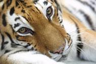 Пражскому зоопарку исполняется 80 лет