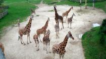 Посетители пражского зоопарка развлекут его обитателей