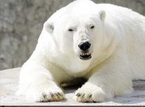 В Санкт-Петербурге появится крупнейший в Европе зоопарк