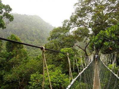 Малайзия, джунгли, джунгли и пляжи