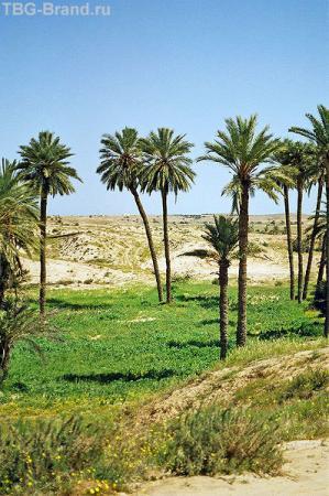 Подъезжаем к Сахаре