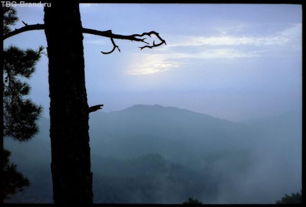 Кипр. Тродос. Загогулина. Туман. (с) автор названия Рантон