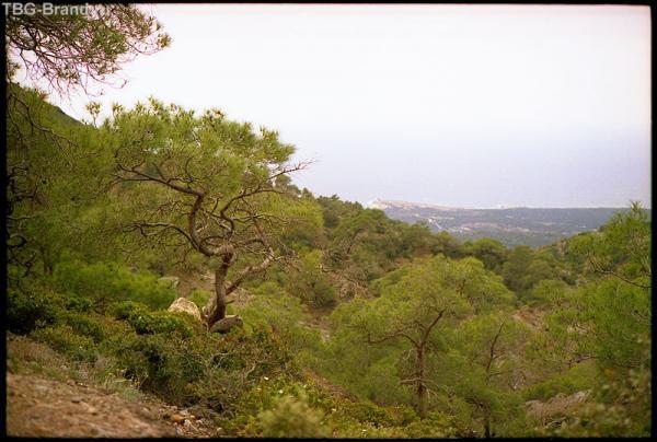 Кипр. Тродос.