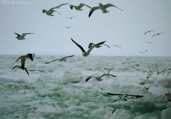 Птички надо льдами. Абасири.