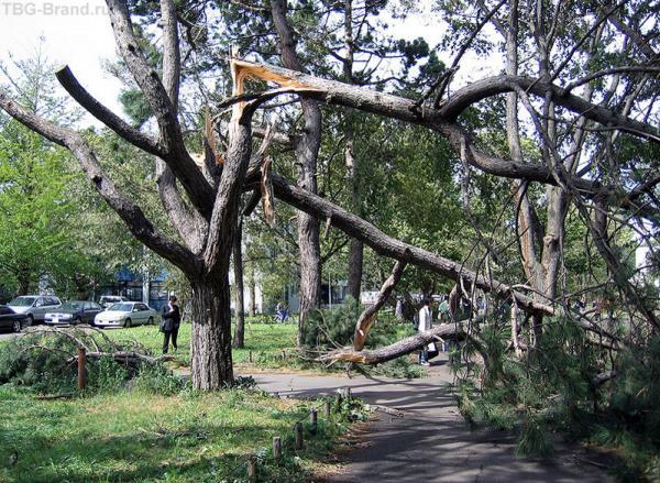 Деревья ломались как спички