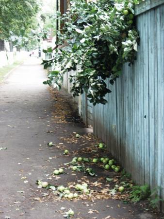 Яблоневый спас в Суздале