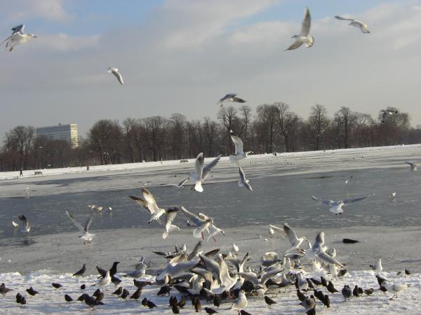 Внезапная зима жизни не помеха