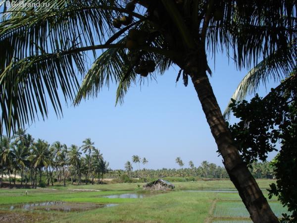 Рисовая плантация