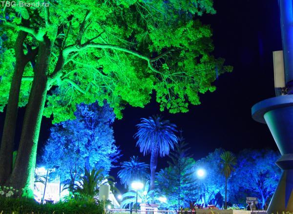 ночной цвет
