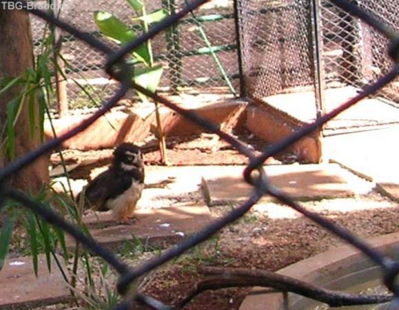 многие виды сов живу в норах