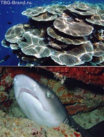 Та самая акула, которая не кусается и кораллы-убийцы