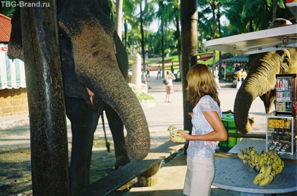 Кормить слона, как оказалось, вовсе нелегко...