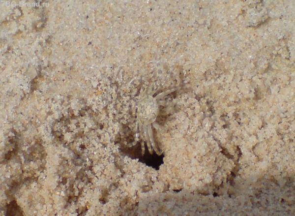 На пляже крабиков больше, чем людей!