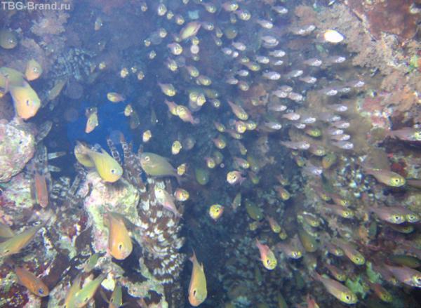 Стая испуганных рыбок