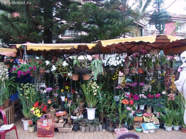 Далат - цветочный рай 2