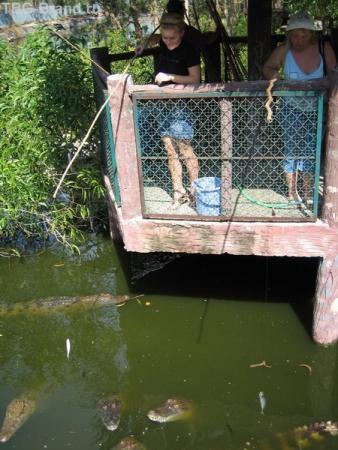 ловись, ловись...крокодильчик