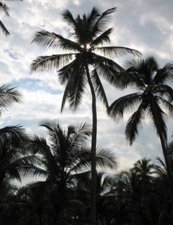 Силуэт из тропиков