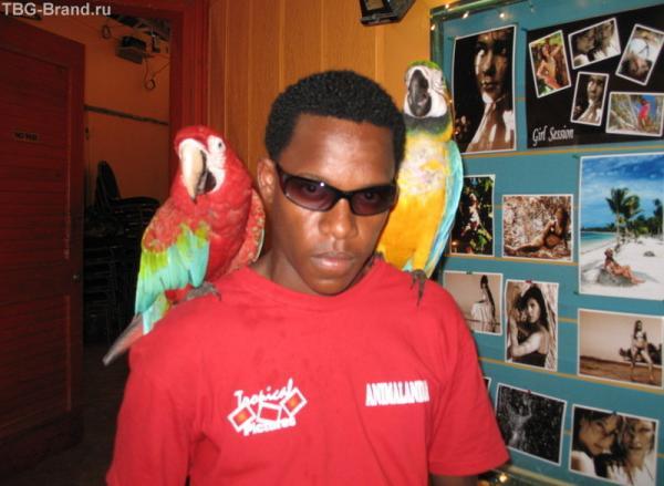 Друг попугаев