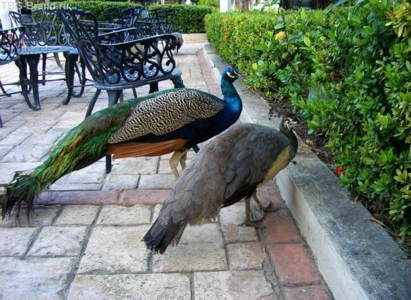 райские птички возле ресторана