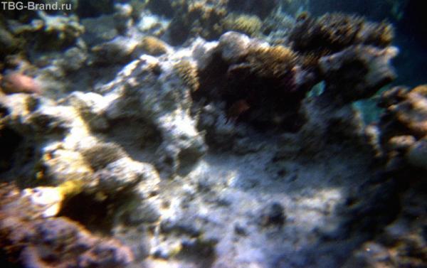 Опыты с подводным фотоаппаратом