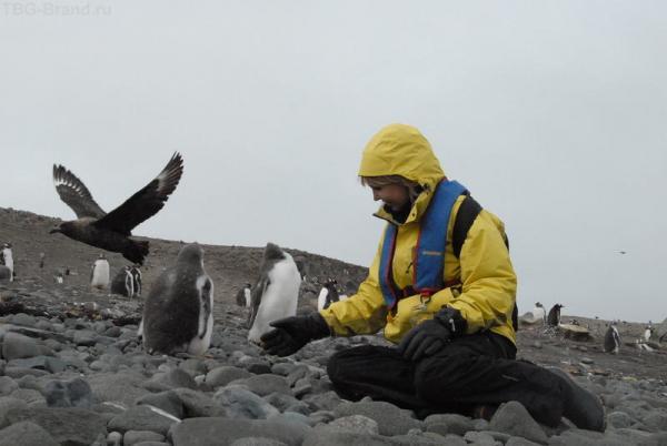 это еще детеныши пингвинов