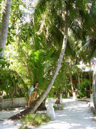 территория острова вся в пальмах
