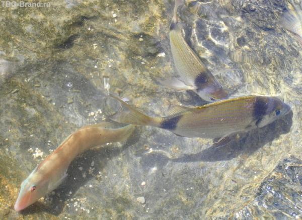 так хорошо видно рыб