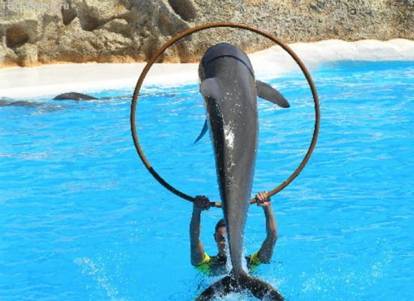 шоу дельфинов(Лоро Парк)