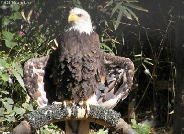 Гордая птица(Джунгли Парк)