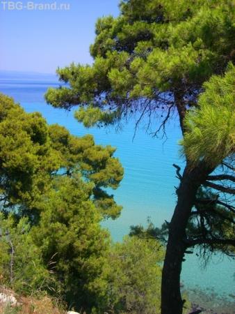 Деревья из воды