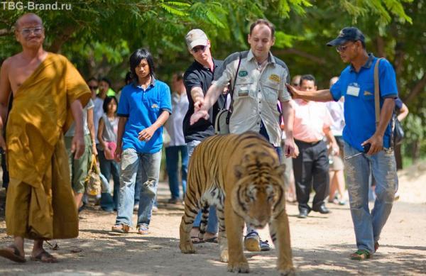 меня оттаскивают от тигра, он начал рычать.