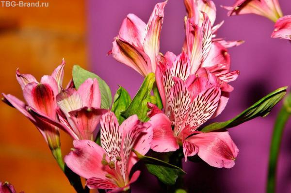весна... в розовых тонах...