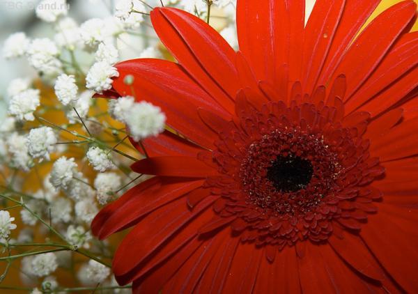 весна... в красном...