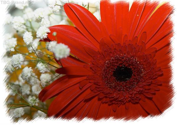 весна в красном