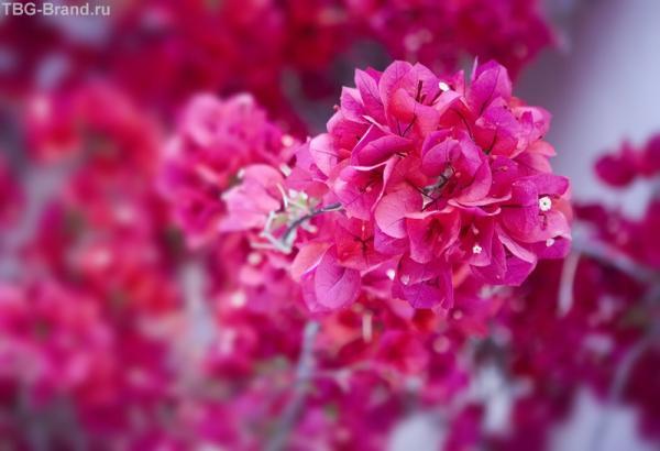 розовый на розовом