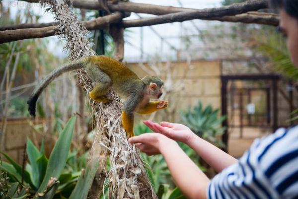 обезьяны неоригинальны... попрошайничают и всё тянут в рот...