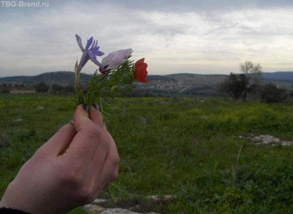 Цветы первые