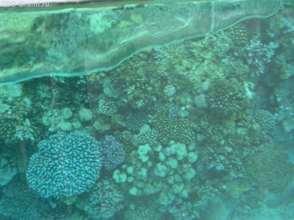 коралы сквозь теклянное дно лодки