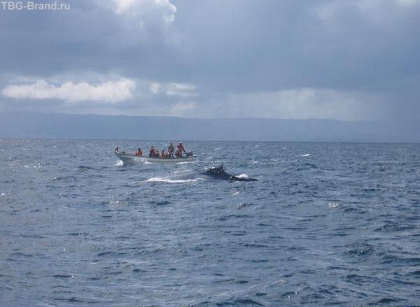 осторожно! киты!