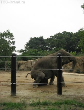 пукающий слон