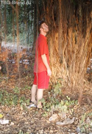 А дерево из корней?