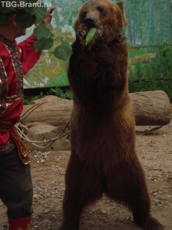 медведь-вегетарианец